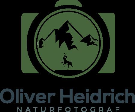 Logo 1 V3